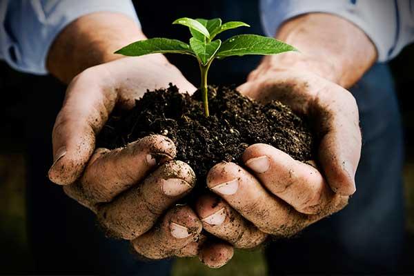 Pflanzenkohle Vortrag