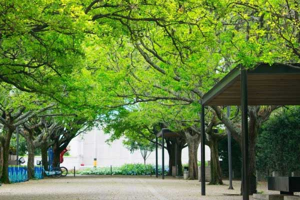 Webinar Biochar in Urban Green Spaces
